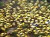 8. Taxi Graveyard, Κίνα