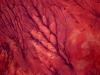 «Φλέβες» στην έρημο της Σομαλίας