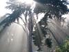 sunbeam13